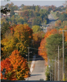 Road with Fall Coloured Trees